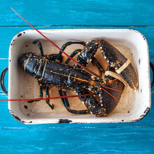 Dorset Shellfish black lobster in a tray
