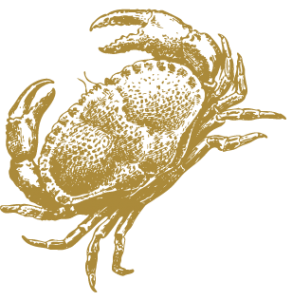 Dorset-Shellfish-crab-drawing