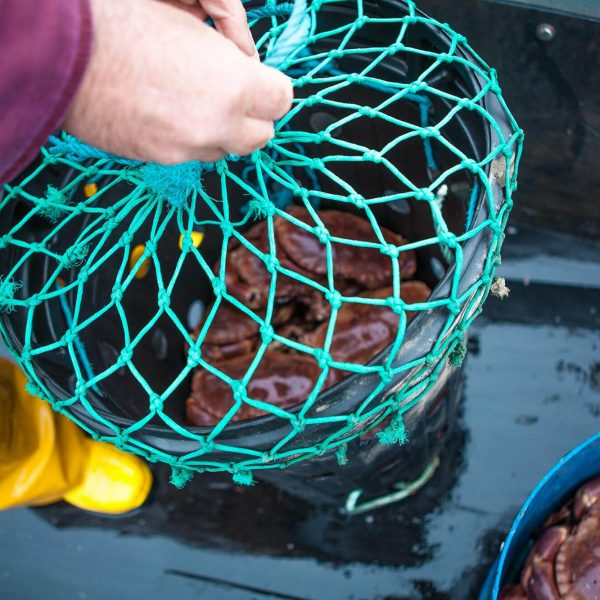 Dorset Shellfish crabs in a net