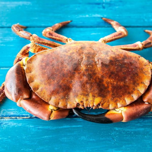 Dorset Shellfish large crab on blue wood
